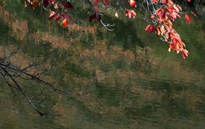 081205_red_leaves.jpg