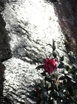 081211_red_flower.jpg