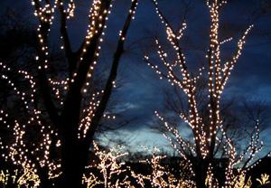 081214_christmas_trees.jpg