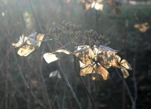 081221_dried_flowers.jpg