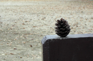 081228_pinecone.jpg