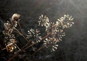 081230_dead_flowers.jpg