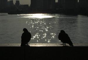 090119_pigeons.jpg