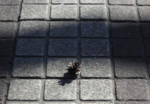 090203_pinecone.jpg