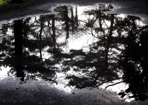 090220_puddle.jpg