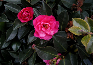 090226_red_flowers.jpg
