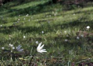 090318_white_flowers.jpg