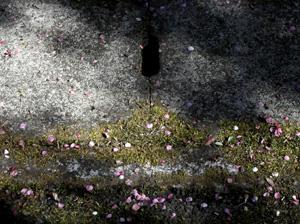 090322_fallen_leaves.jpg