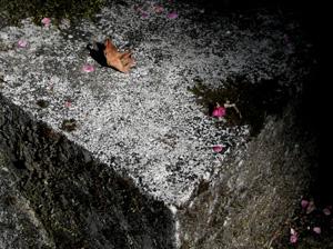 090322_fallen_leaves_b.jpg