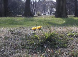 090331_flowers.jpg