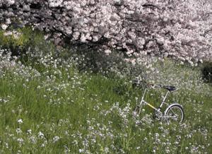 090407_bicycle.jpg
