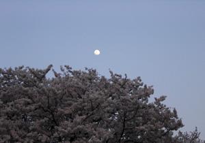 090408_moon.jpg