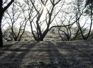 090410_sakura_snow_c.jpg