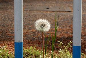 090419_puffball.jpg