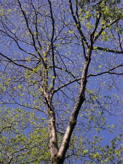090423_green.jpg
