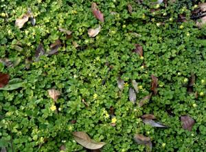 090427_small_flowers.jpg