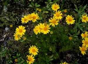 090602_yellow_flowers.jpg