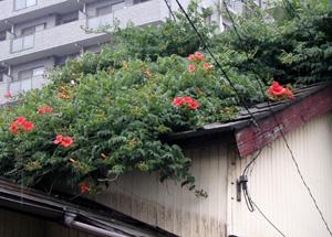 090610_natural_planter.jpg