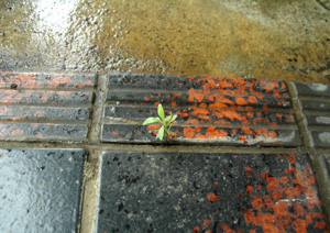 090622_natural_planter.jpg