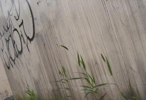 090624_pampas_grass.jpg