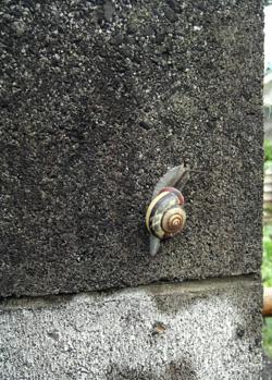 090706_snail.jpg