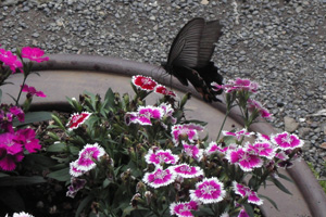 090711_butterfly.jpg