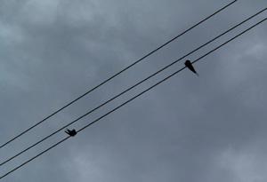 090715_swallows.jpg
