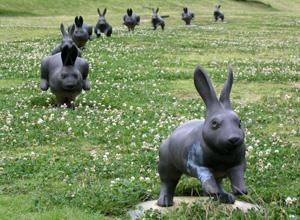 090721_rabbits.jpg