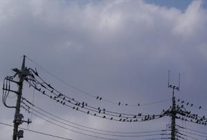 090803_pigeons.jpg