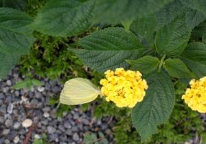 090805_butterfly.jpg