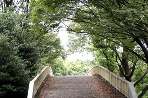 090814_bridge.jpg