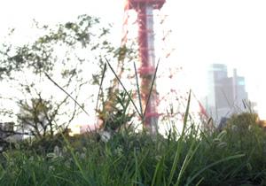 090815_evening_grass.jpg