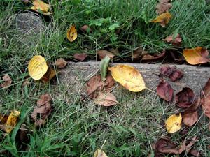 090901_fallen_leaves.jpg