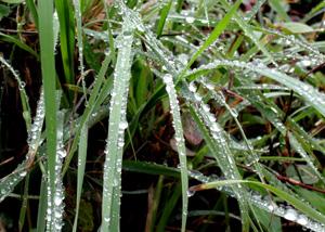 090902_rain_drops.jpg