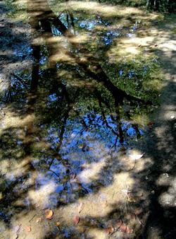 090913_puddle.jpg