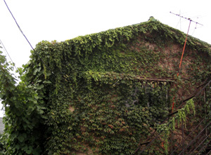 090925_ivy_ covered_house.jpg