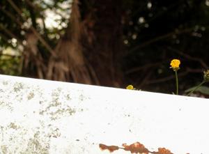 091014_yellow_flowers.jpg