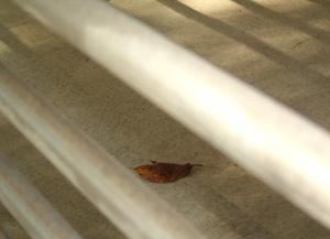 091015_fallen_leaf.jpg