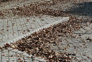 091105_fallen_leaves.jpg