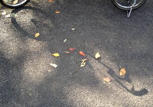 091107_fallen_leaves.jpg