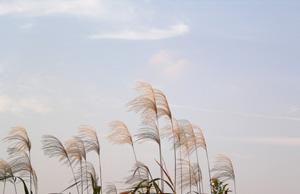 091109_pampas_grass.jpg