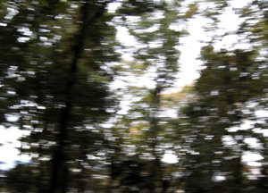 091111_trees.jpg