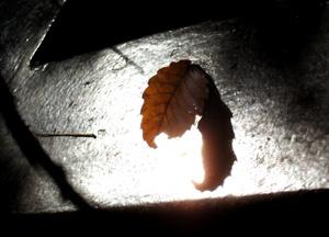 091126_fallen_leaf.jpg