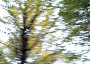 091127_forest.jpg
