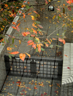 091202_floating_leaves_b.jpg