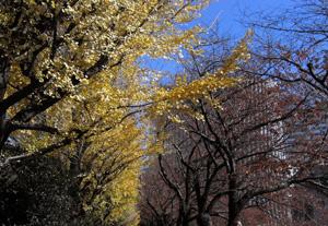 091204_red-&-yellow.jpg