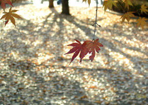 091207_two_leaves.jpg