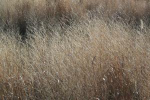 091230_dead_grass.jpg