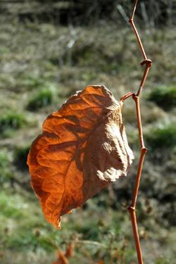 100104_dead_leaf.jpg