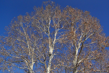 100107_winter_tree.jpg